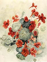 Nasturtiums by Wendy Griffiths